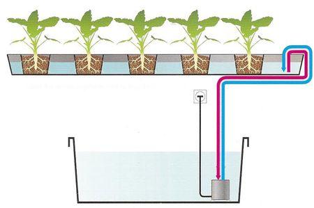 hidroponia-funcionamento