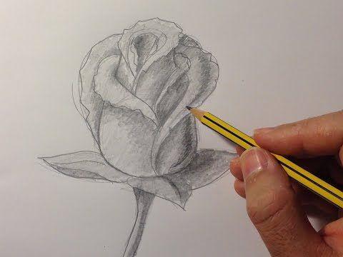 Como Dibujar Una Rosa Como Dibujar Rosas Dibujos De Rosas Dibujos A Lapiz Rosas