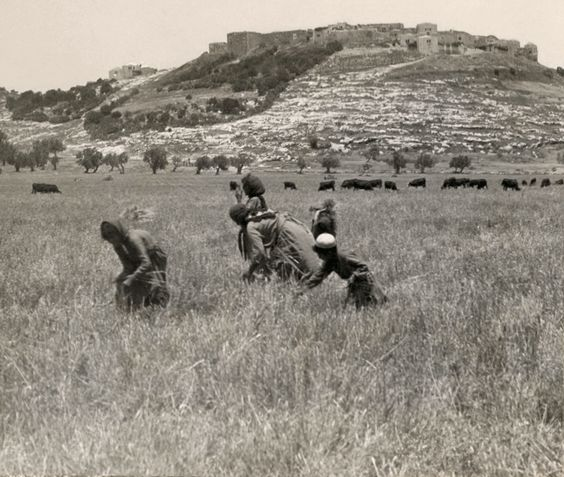 Workers in a field in Sanur, West Bank, Palestine. 1908 Video format:http://youtu.be/T-nlOVUrVog