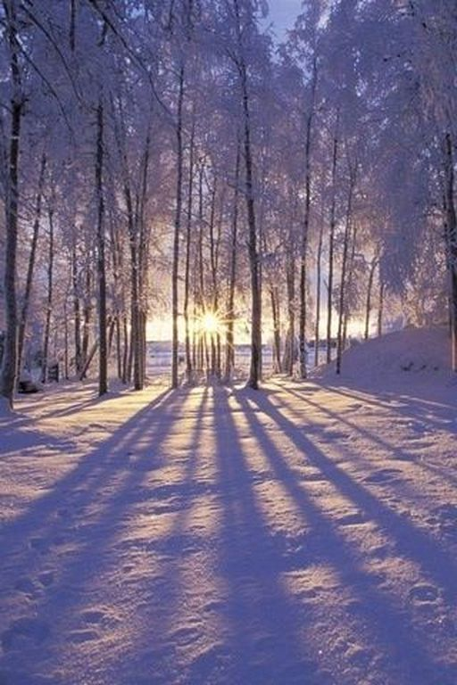 23 Beautiful Winter Nature Photography Ideas You Will Love Winter Scenery Winter Landscape Winter Pictures