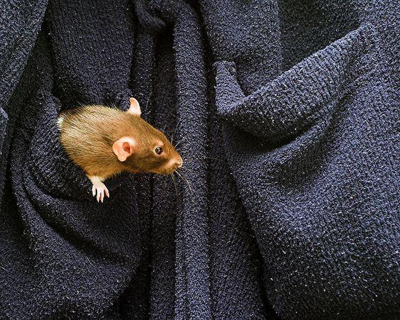 rats <3 pockets.