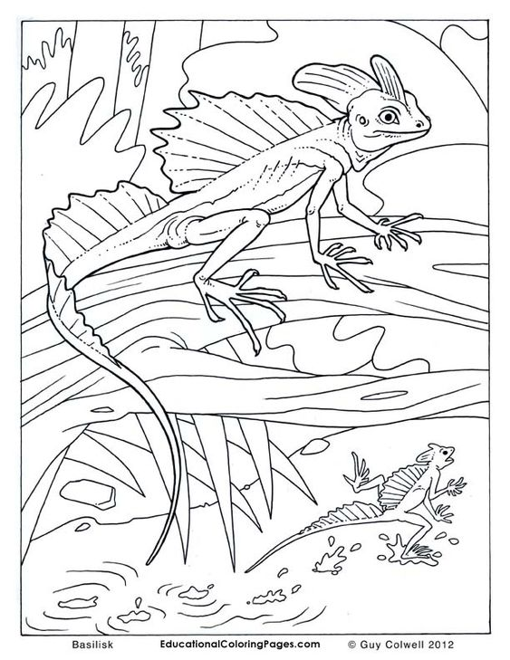 Sand Lizard coloring page  SuperColoringcom  coloring animals