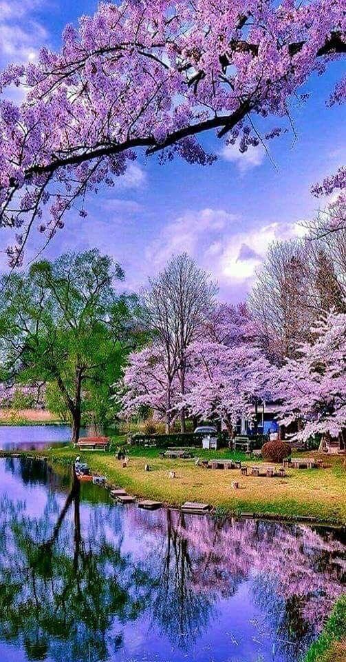 Spring Beautiful Nature Beautiful Landscapes Landscape