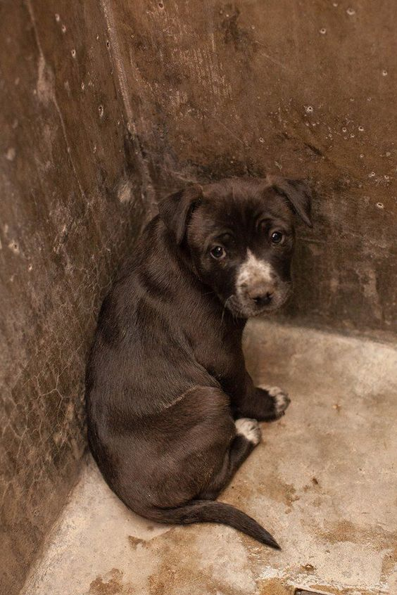 NEXT on DEATH ROW - cute mix puppy ****$35 to adopt LOCATED AT ODESSA TEXAS ANIMAL CONTROL. https://www.facebook.com/photo.php?fbid=715683748455866&set=pb.248355401855372.-2207520000.1390317068.&type=3&theater