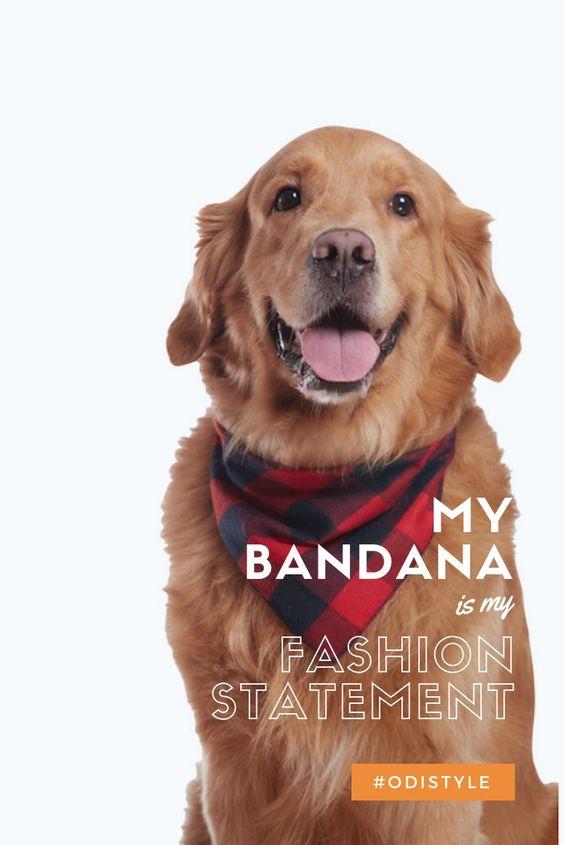 8 Interesting Uses for Dog Bandanas! Tested and Approved | Plaid dog bandana,  Dog bandana, Cute animal videos