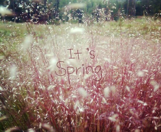 ×× It's Spring ××
