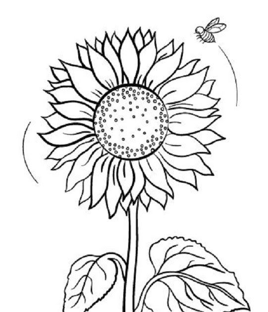 Wow 30 Gambar Kartun Mewarnai Matahari Di 2020 Bunga Matahari