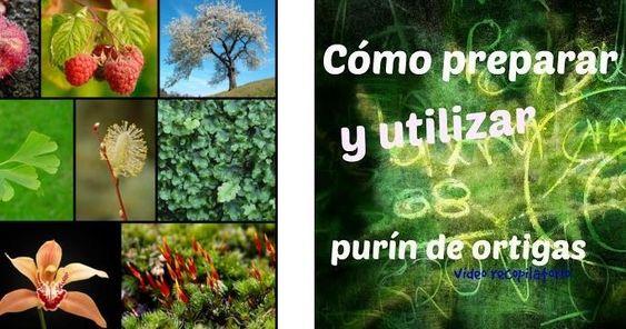 ¿Deficiencias de nutrientes en tus plantas? ¡NO con esta información!