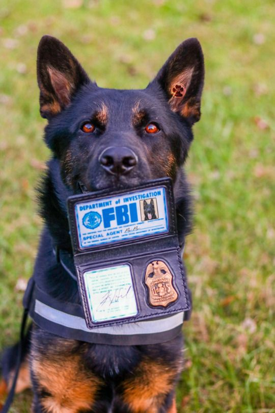 2woofs 1meow Excuse Me Maam Im Agent Pup Pup From The Fbi Federal