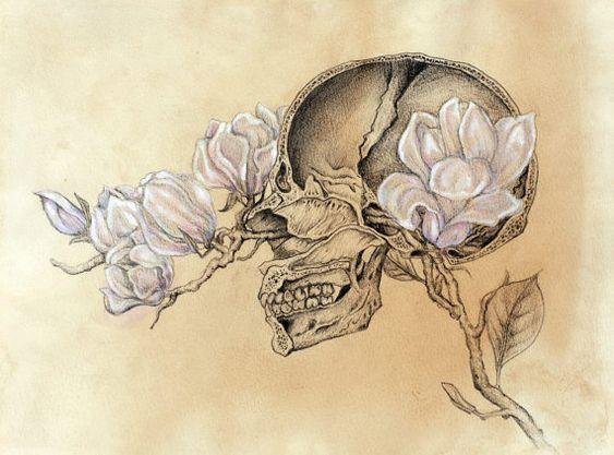 Cabeza. Anatomía.