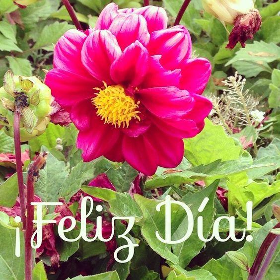 Good Morning!  #ideassoneventos #blog #bloglovin #organizacióndeventos #comunicación #protocolo #imagenpersonal #bienestarybelleza #decoración #inspiración #bodas #buenosdías #goodmorning #jueves #thrusday #happy #happyday #felizdía #flores #flowers