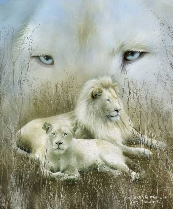 Spirit of the white lion Proud and pure Your message is to live in harmony and calmness With yourself and others For you are the symbol of goodness In all creatures.  Prose by Carol Cavalaris ©09 Photo by Amirapsp
