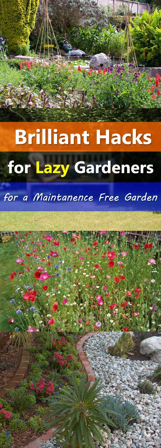 Gardening Hacks For The Lazy Gardeners To Make A Low 400 x 300