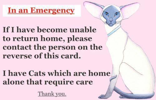 Cat Siamese Emergency Card x 2 Cats