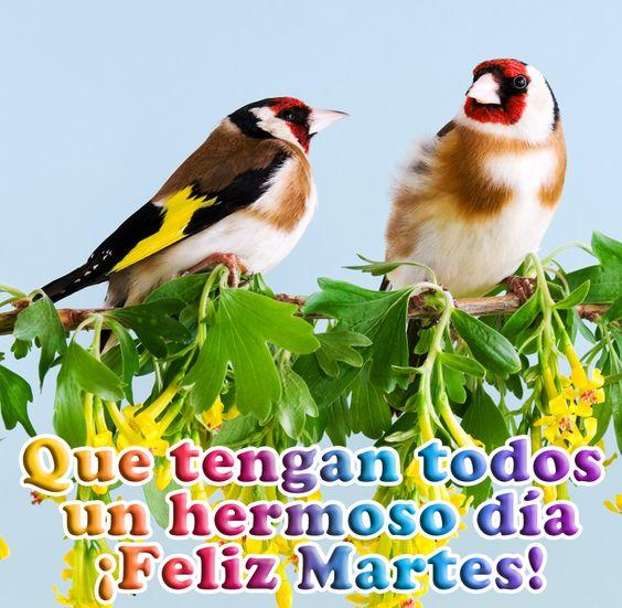 BANCO DE IMAGENES: Feliz Martes - Mensajes Positivos para Compartir - Buenos Días