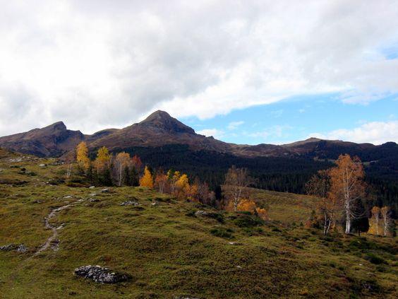 Firey trees on the Alpiglen trail from Kleine Scheidegg, Switzerland