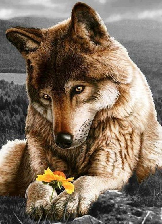 Wolf and flower.. ☺️ So adorable... ❤️❤️❤️ This is how I see you, Woveee ☺️ So Lovely beyond words❤️ Look at his eyes ☺️ so humble.. like you Wovee ☺️ Xo's❤️❤️❤️