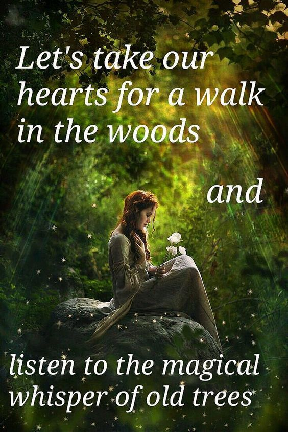 Let's take our hearts for a walk in the woods and listen to the magical whisper of old trees
