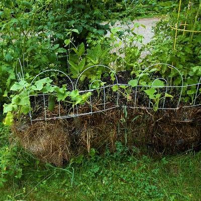 straw bale container gardening: Alternative Gardening, Straw Bale Gardening, Gardens Straw, Bale Container, Bail Gardening, Bale Gardens, Container Gardening, Straw Bales