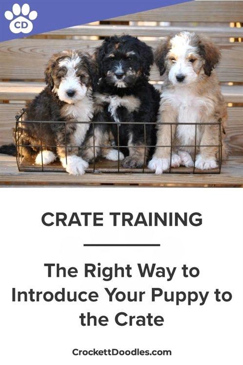 Dog Training Distractions Zak George S Dog Training Revolution