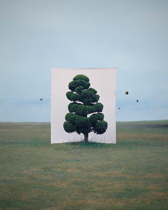 Myoung Ho Lee's series entitled 'Tree'