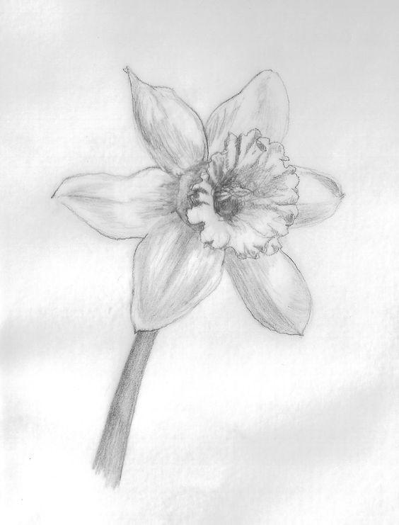 March birth flower drawing