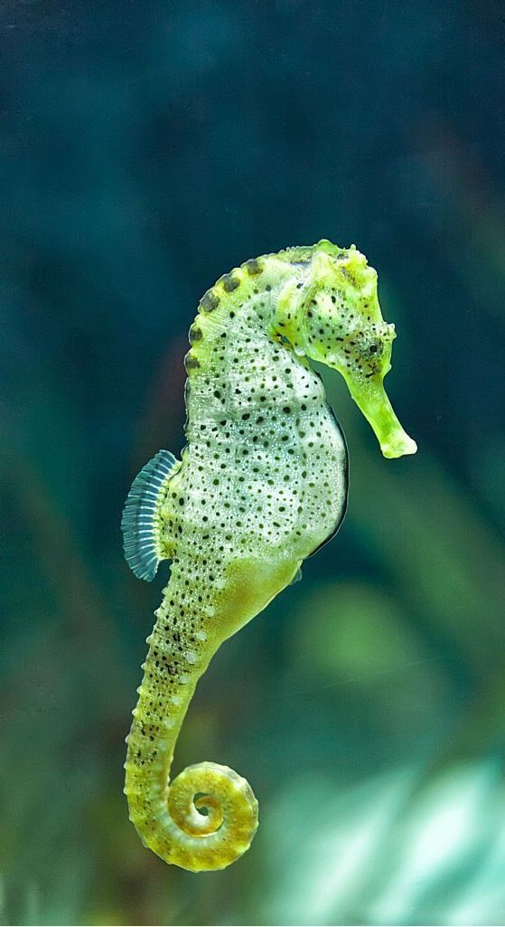 20 Colorful Seahorses That Will Make Your Jaw Drop Birds Sea In 2020 Beautiful Sea Creatures Ocean Creatures Sea Animals