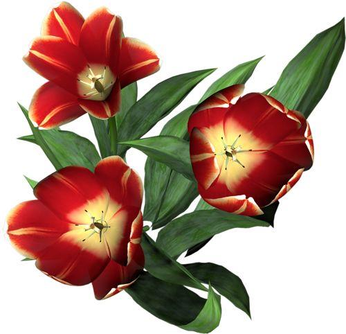 Цветы в PNG. Обсуждение на LiveInternet - Российский Сервис Онлайн-Дневников