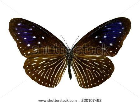 Papilionidae Fotos, imagens e fotografias Stock | Shutterstock