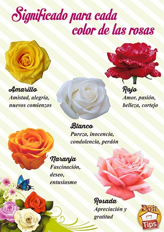 El color de las rosas tiene un significado especial - Significado colores de las rosas ...