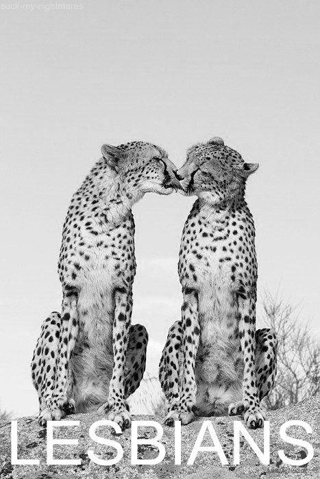 Lesbians in love.
