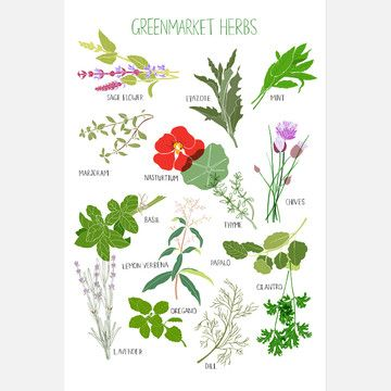 Greenmarket Herb Poster  by Claudia Pearson: Green Market, Herb Poster, Gardening Flowers Herbs Plants, Herbs Spices, Greenmarket Herbs, Claudia Pearson, Herb Print