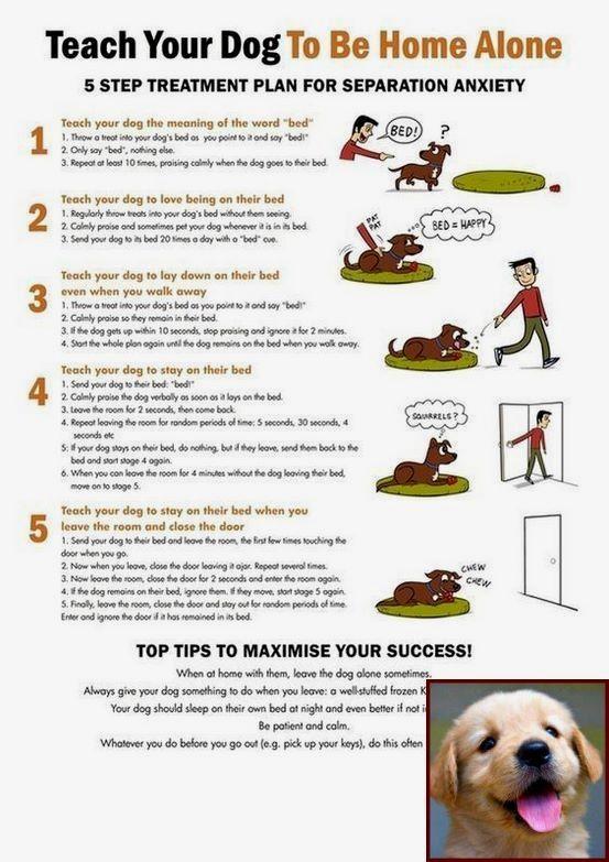 Dog Behavior Vs Wolf Behavior And Clicker Training For Dogs Pdf