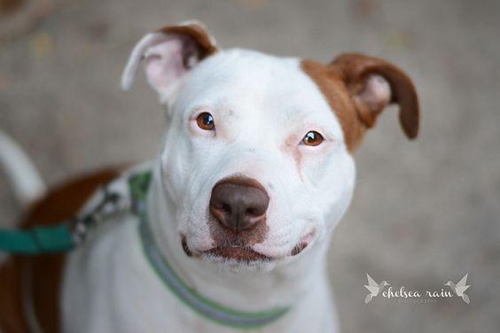 Washington Humane Society - Flo | Flickr - Photo Sharing!