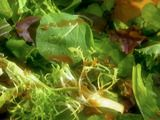 Course : Green Salad
