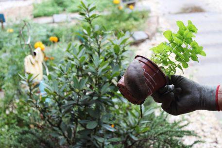 Controle ecológico de lesmas e caracóis