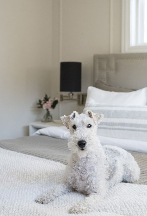 Cozy Home Updates For The Holidays Room For Tuesday Fox Terrier Puppy Wire Fox Terrier Fox Terrier