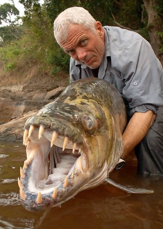 Pinterest the world s catalogue of ideas for World largest fish