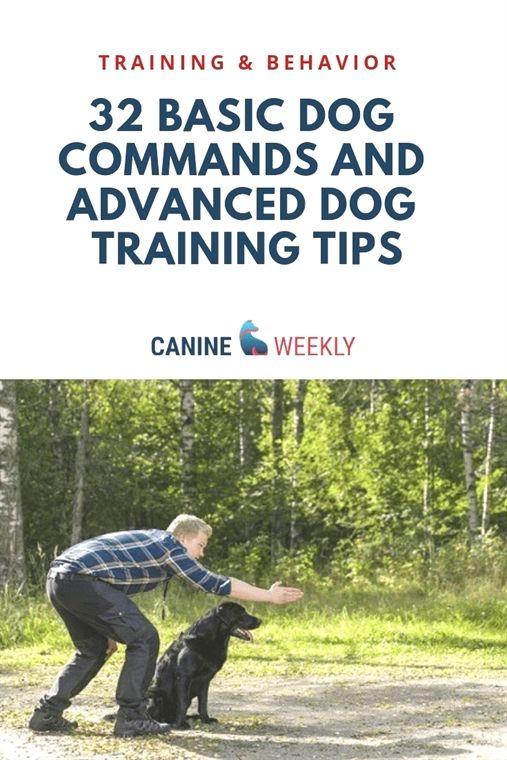 Dog Training Ball Dog Training Manual Book Dog Training 75002