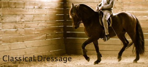Renaissance of the timeless craft that is 'Classical Dressage'