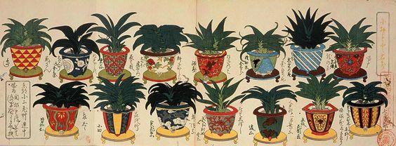 Edo-plants painted by Sekine Untei