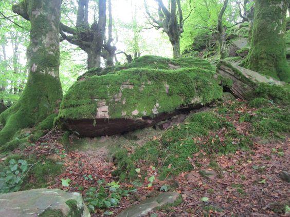 Formas curiosas de las rocas en el bosque.