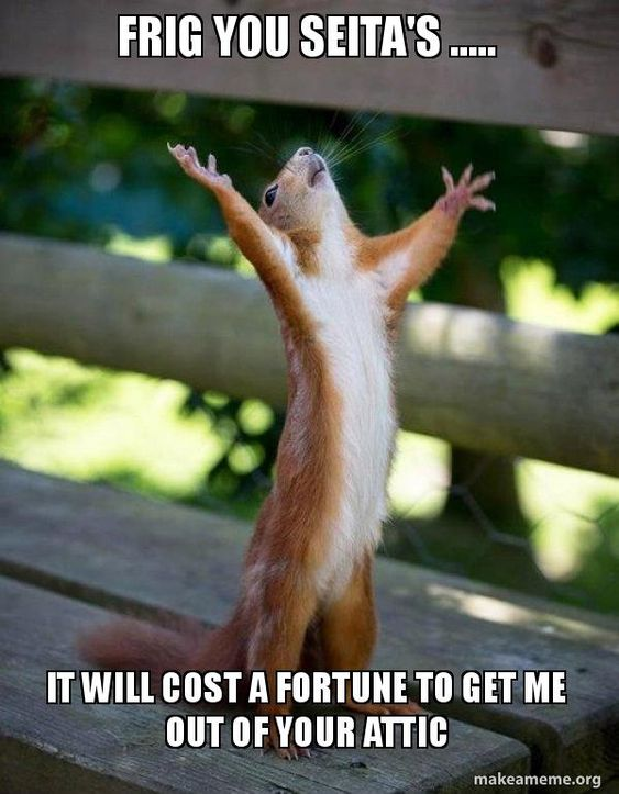 Frig You Seita S It Will Cost A Fortune To Get Me Out Of Your Attic Happy Squirrel Make A Meme Funny Animals Cute Animals Happy Squirrel
