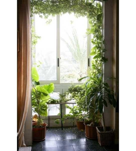 12 best houseplants images on pinterest gardening indoor plants and landscaping