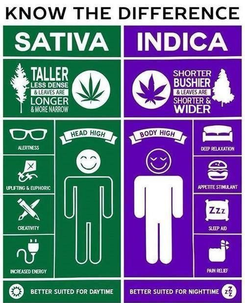 cannabis sativa vs indica Cannabis plants have been growing all over the world for centuries and have,like all other species, adapted to their new environments or evolved due to interbreeding.