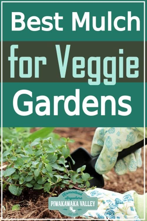 What Is The Best Mulch For Vegetable Gardens Find Out Everything You Need To Know About Mulching You Mulch For Vegetable Garden Vegetable Garden Tips Mulching
