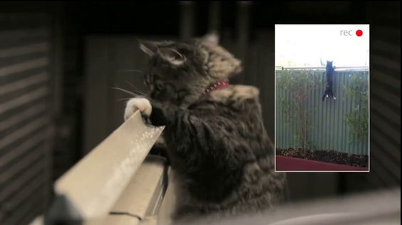 The Oscillot cat fence - cats can't get over it!