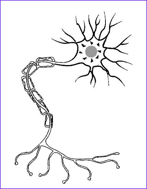 11 Awesome Nerve Cells Coloring Collection Coloring Pages