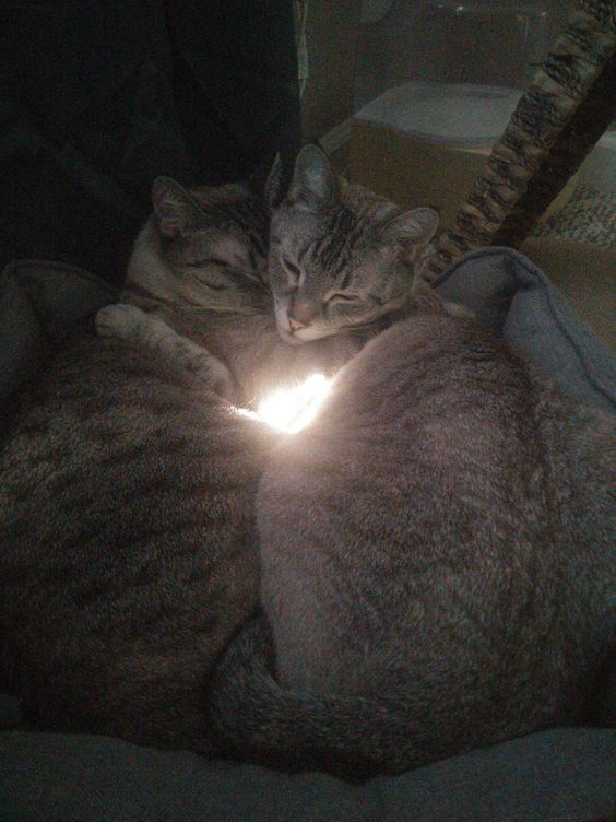 Cuddling cats underneath a window http://ift.tt/1PyOpOu