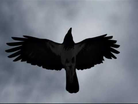 Songs About Nature Quot Black Raven Maxim Troshin Songs